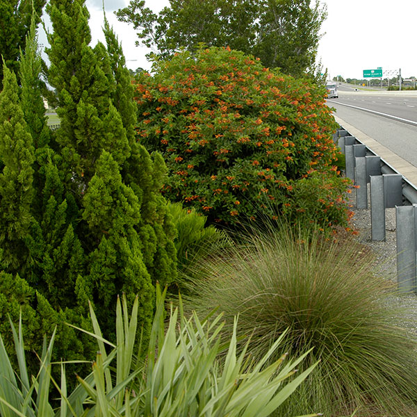 Native foliage growing beside Central Florida expressway
